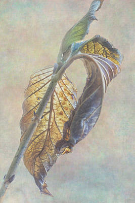 Twilight Of Autumn Print by Angie Vogel