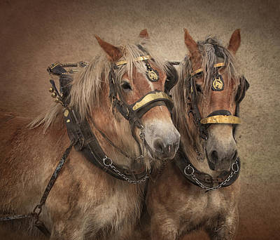 Belgian Draft Horse Photograph - Twin Team by Gigi Embrechts