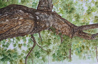 Twisted Maple Print by Patsy Sharpe