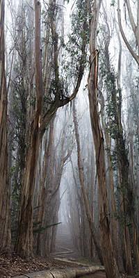 Presidio Park Photograph - Twisted Path by Dustin  LeFevre