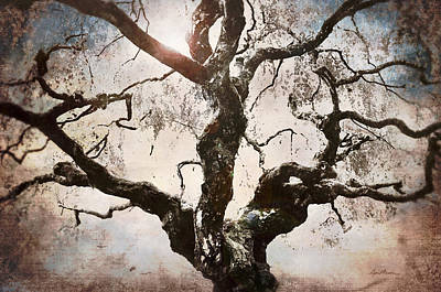 Glare Digital Art - Twisted Tree I by April Moen