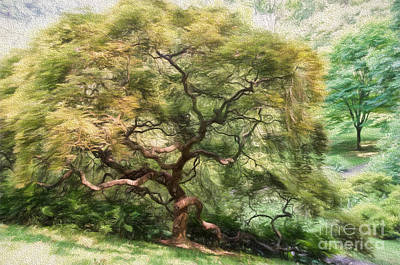 Twisty Tree Print by Lois Bryan