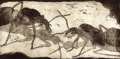 Ant Drawing - Two Ants In Communication - Etching by Urft Valley Art