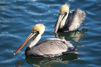 Two Beautiful Pelicans Print by Cynthia Guinn