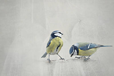 Feed Mixed Media - Two Birds by Heike Hultsch