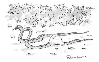 Swallow Drawing - Two Boa Constrictors Slither Along. One Has Eaten by Danny Shanahan
