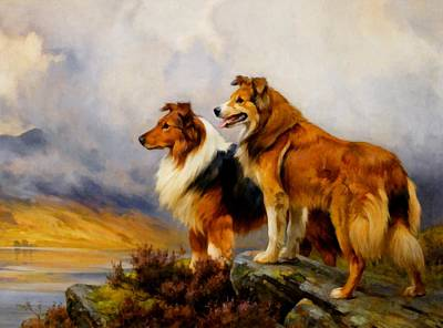 Two Collies Above A Lake Dr Print by Wright Barker