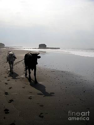 Beach Photograph - Two Cows Not The Website by Stav Stavit Zagron