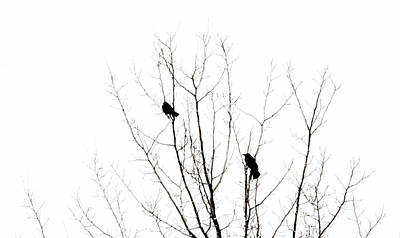 Two Crows Print by Marilyn Hunt