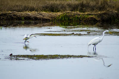 Two Fish Digital Art - Two Egrets by Bill Cannon