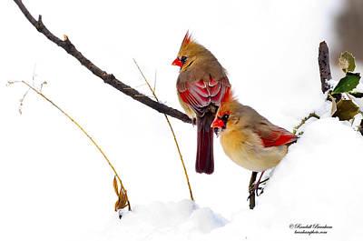 Two Females Posing As Cardinals Print by Randall Branham