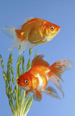 Two Fish Digital Art - Two Fish Fs101 by Greg Cuddiford