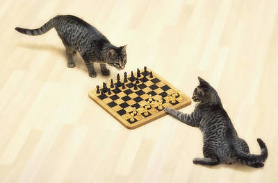 Board Game Photograph - Two Grey Tabby Cats Playing by Thomas Kitchin & Victoria Hurst