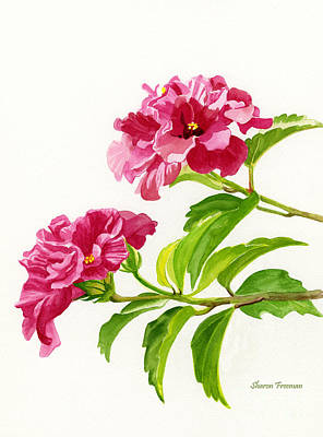 Two Hibiscus Rosa Sinensis Blossoms Print by Sharon Freeman