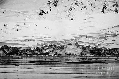 Fournier Photograph - two humpback whales megaptera novaeangliae logging or sleeping in Fournier Bay Antarctica by Joe Fox