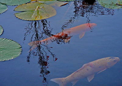 Two Koi In A Pond Print by Kirsten Giving