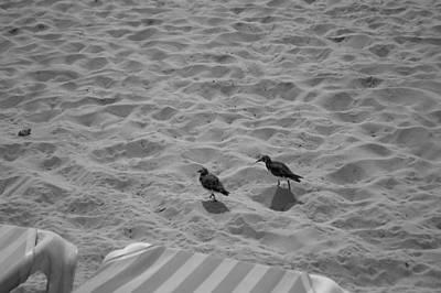 Two Little Birds On The Beach  Print by Shaun Maclellan