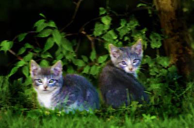 Kitten Digital Art - Two Little Kittens by Bill Cannon