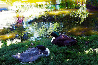 Cabin Corner Photograph - Two Mallard Ducks Feng Shui Love by Michele  Avanti