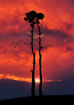 Two Oaks Together In The Field At Sunset Print by Bess Hamiti
