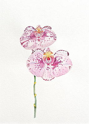 Fushia Painting - Two Orchids by Michele Myers