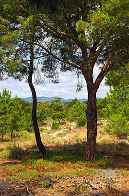 Agronomy Photograph - Two Pine Trees by Carlos Caetano