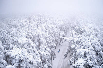 Forest Photograph - Two Skiers by Ari Salmela