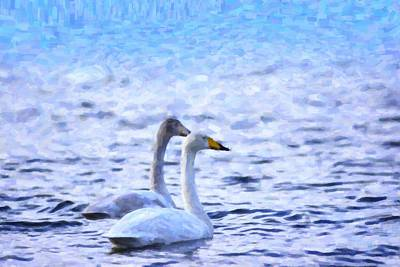 Two Swans Swimming Print by Toppart Sweden