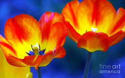 Two Tulips Print by Kathleen Struckle