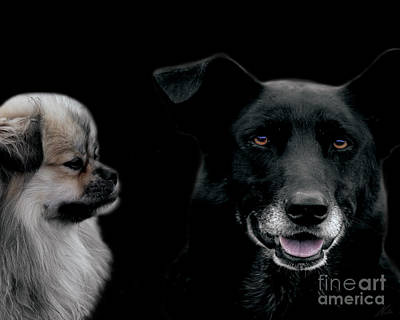 Neutered Photograph - Two Types Of Mutts by Nola Lee Kelsey