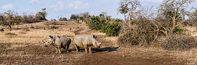 Rhinoceros Photograph - Two White Rhinoceros Ceratotherium by Panoramic Images