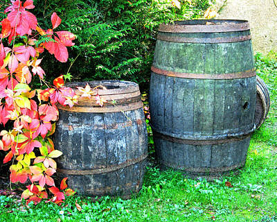 Two Wine Barrels And Red Ivy Digital Print Print by Greg Matchick