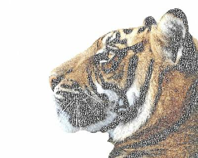 India Wildlife Painting - Typography - Tiger by Celestial Images