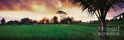Ubud Rice Fields Print by Rod McLean
