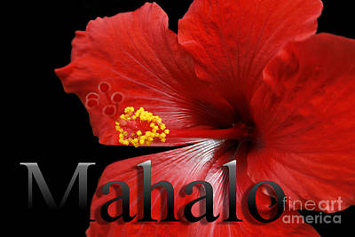 Ula Anoano Hanohano Red Tropical Hibiscus Mahalo Print by Sharon Mau
