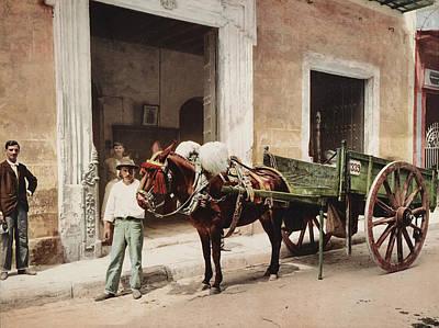 Mule Digital Art - Un Mulo De La Habana 1900 by Digital Reproductions