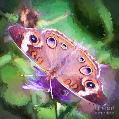 Butterfly Photograph - Uncommon Beauty - Common Buckeye Butterfly by Kerri Farley