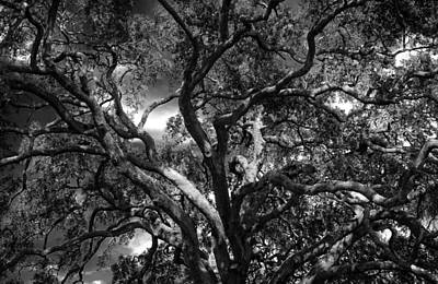 Under A Tree In Black And White Print by Chrystal Mimbs