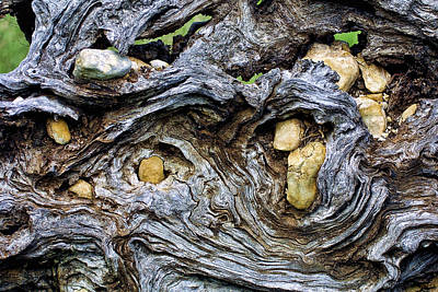Under Roots Of Dead Tree Print by Linda Phelps