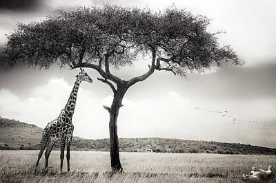 Lioness Photograph - Under The African Sun by Piet Flour