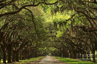 Georgia Plantation Photograph - Under The Ancient Oaks by Adam Jewell