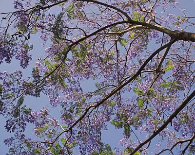 Under The Jacaranda Tree Print by Rona Black