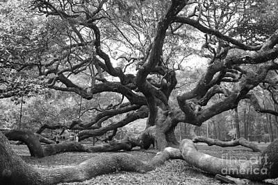 Charleston Photograph - Under The Oak by Manda Renee