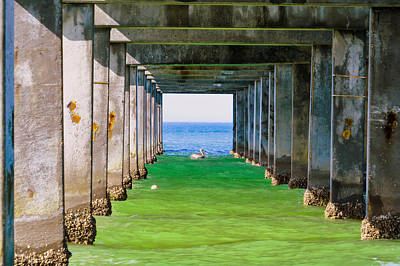 Pelican Photograph - Under The Pier by Zina Stromberg