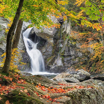 Bash Bish Falls Photograph - Under The Tree Square by Bill Wakeley