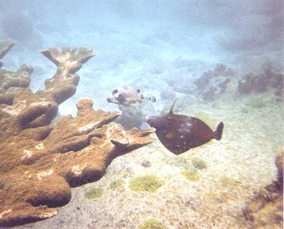 Photograph - under water in Bonaire by Teri  Haley