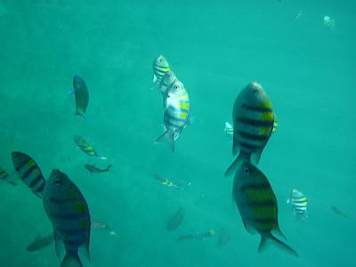 Sun Photograph - Underwater - Long Boat Tour - Phi Phi Island - 011317 by DC Photographer