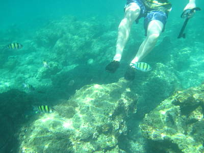 Snorkeling Photograph - Underwater - Long Boat Tour - Phi Phi Island - 01132 by DC Photographer