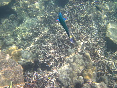 Underwater - Long Boat Tour - Phi Phi Island - 011329 Print by DC Photographer