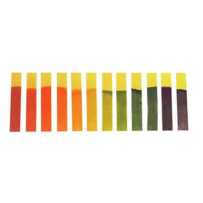 Universal Indicator Paper Print by Science Photo Library